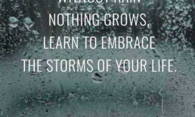 Inspirational quotes About Life How Learn To Embrace The Storms Life Quotes