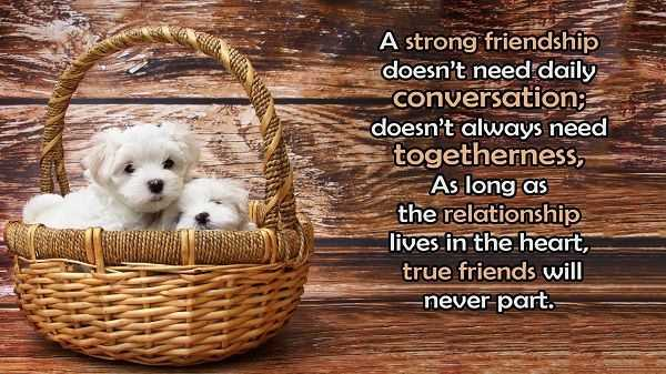 Best Friendship quotes If you Are True Friends Heart touching long distance friendship quotes with images
