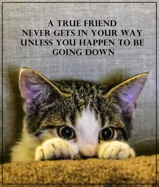 Best Friendship Quotes A True friend never Cross your path