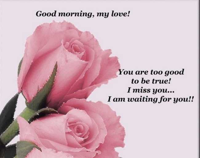 Good Morning My Love Lovingyou : Good morning quotes my love i miss you