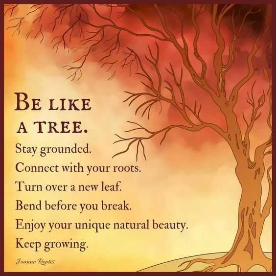 Positive Life quotes Life Sayings Be Like A Tree