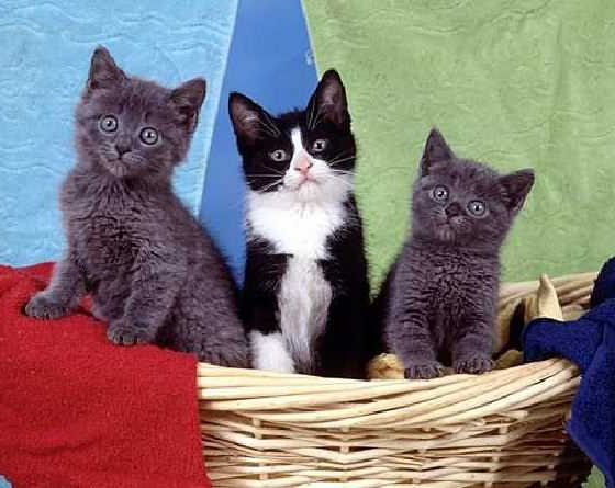 5 Of The Cutest Animal Pics 1
