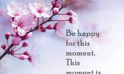 Best Life Quotes Be Happy For This Moment Be Live