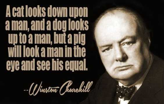 153 Winston Churchill Quotes Everyone Need to Read Funny 5