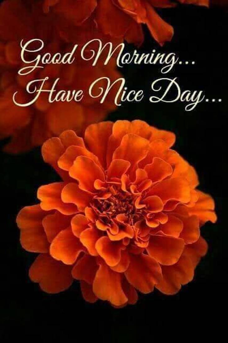 Good Morning Flowers nice images