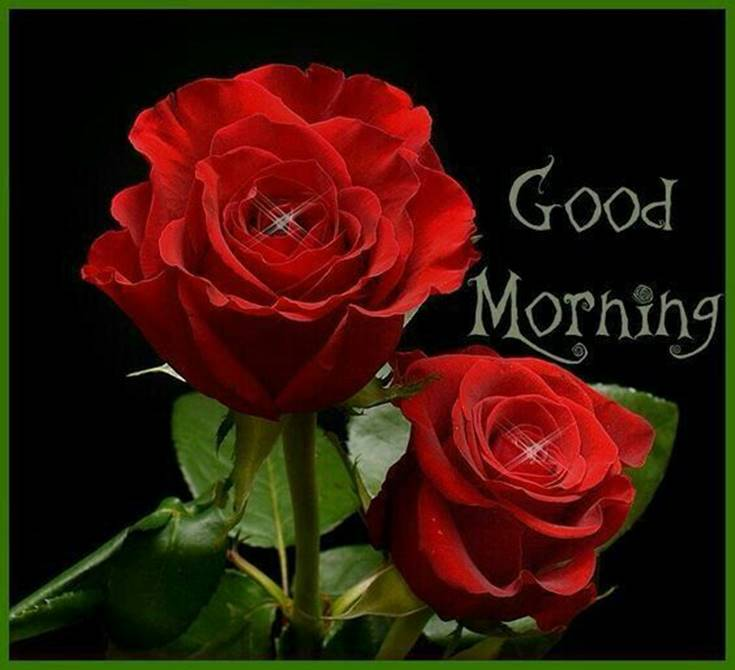 Good Morning Flowers images and best quotes