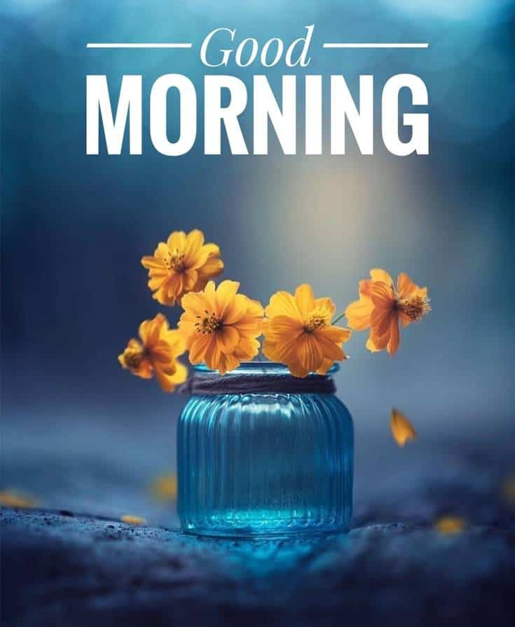 Good Morning Flowers and beautiful images