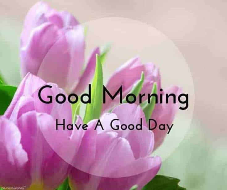Good Morning Flowers have a good day