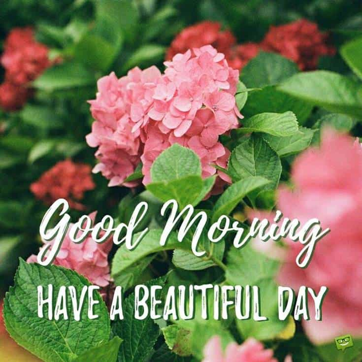 Best Good Morning have a beautiful day