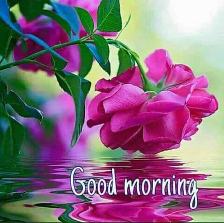 Good Morning Flowers with cool images