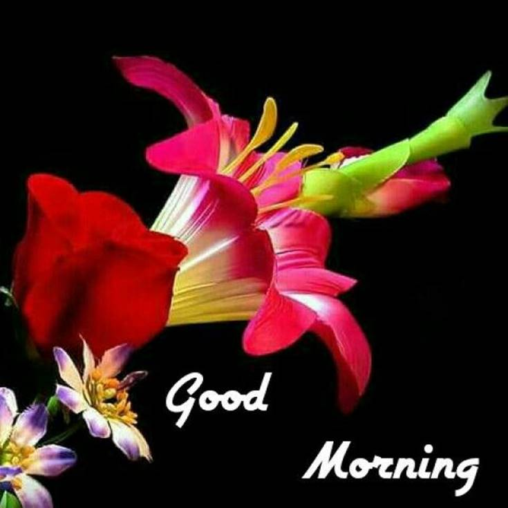 Good Morning Flowers Red images
