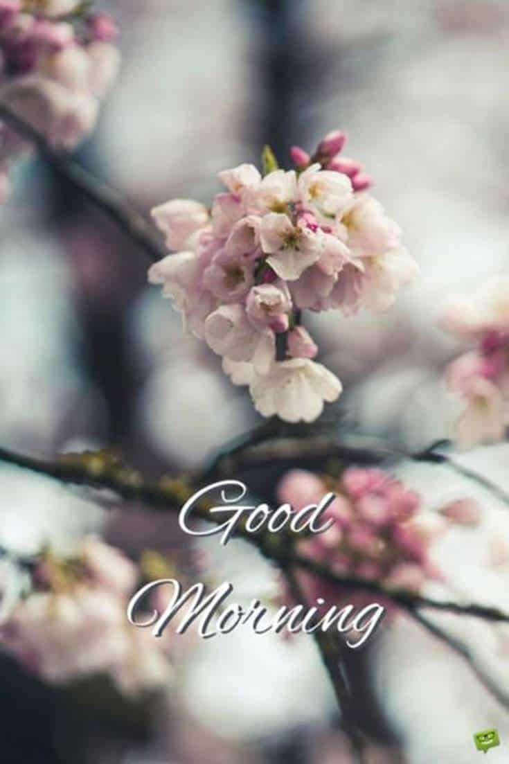 Best Good Morning images and wishes