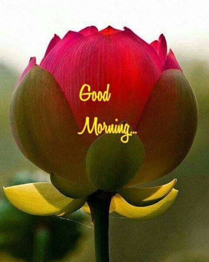 Good Morning Flowers images 43