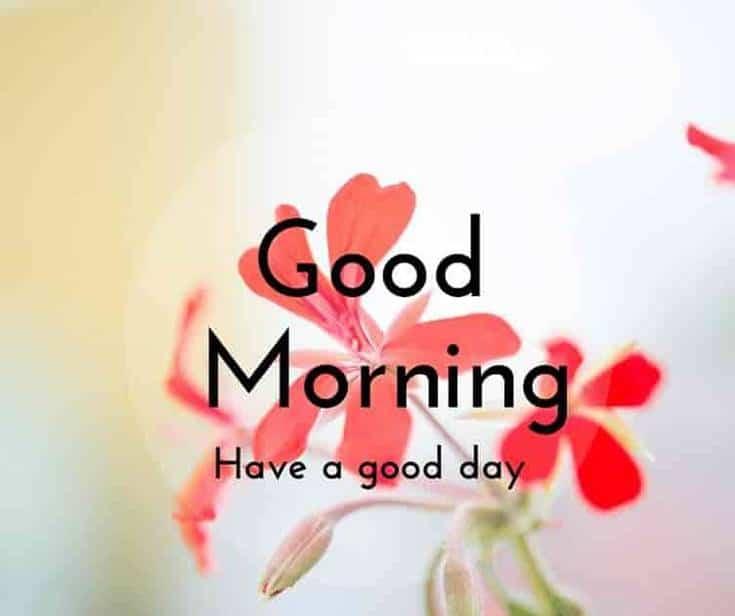 Best Good Morning good day