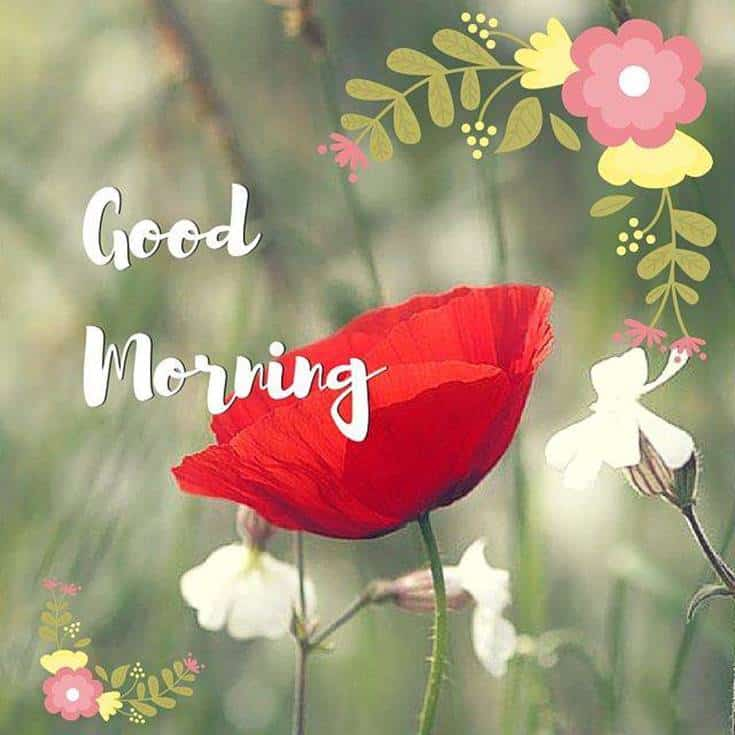 Good Morning images and wishes quotes