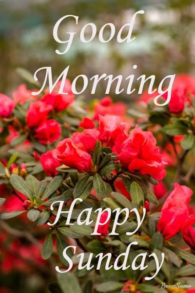 65 Good morning greetings quotes sweet good morning sms