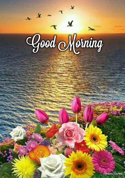 65 good morning wish quotes on morning message greetings