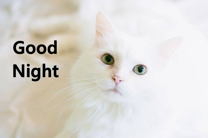 Good Night Memes – Funny Goodnight Memes Images