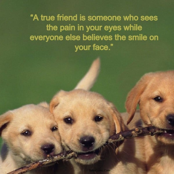 Top 50 True Friendship Quotes | Friendship Quotes And Sayings