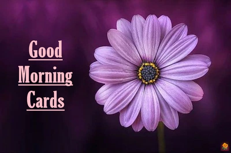 Good Morning Cards to Boost your Morning