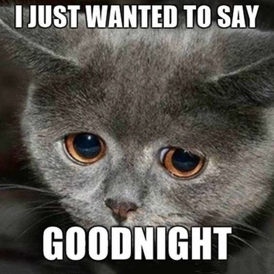 funny good night memes