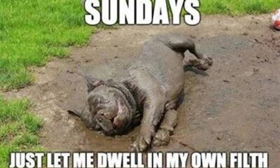 funny sunday memes with beautiful hilarious images