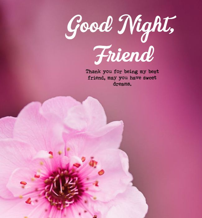 funny good night messages for friends 2
