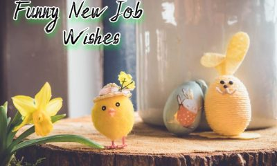 Funny New Job Wishes and Messages Greetings Pictures