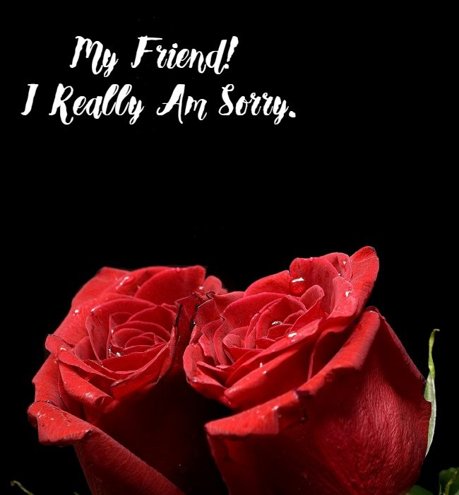 im sorry message for friends