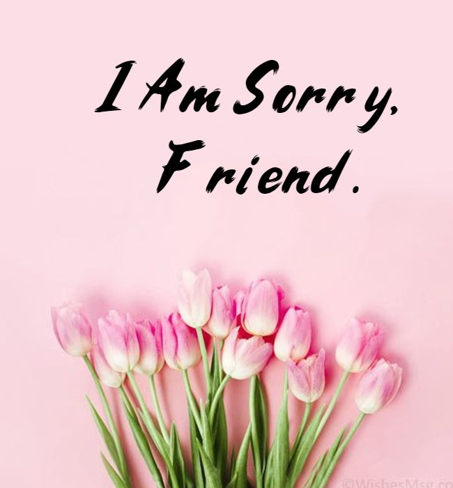 sorry message for friends