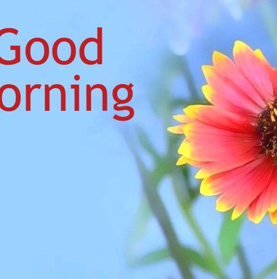 Amazing Good Morning Images Wishes With Pictures And Beautiful Positive Vibes