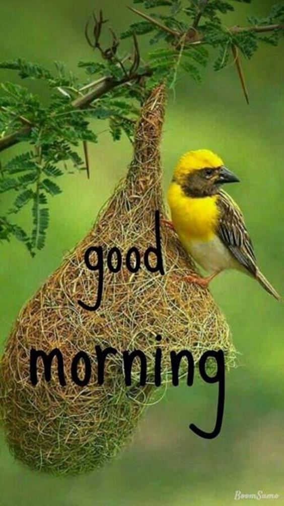 Amazing Good Morning Images Wishes With Pictures And Beautiful Positive Vibesgood morning images for her