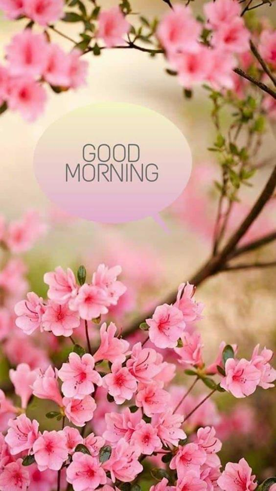 Amazing Good Morning Images Wishes With Pictures And Beautiful Positive Vibesmorning posts