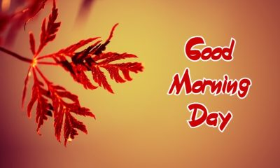 Sweet Good Morning Day Images Wishes With Pictures And Beautiful Good Day Sayings Quotes